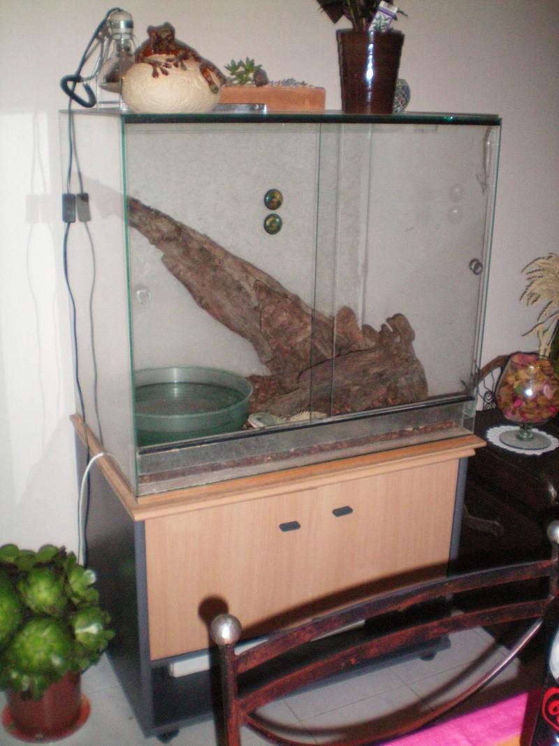 Dragons d'eau avec son terra et meuble 100_0023