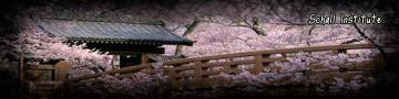Puente de Sakura!