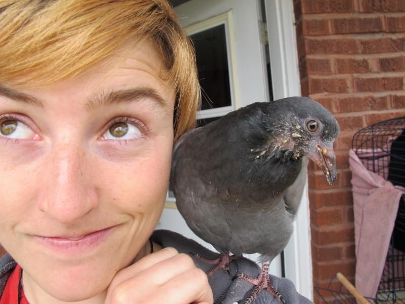 Je ne sais pas où relâcher mon pigeon Img_1210
