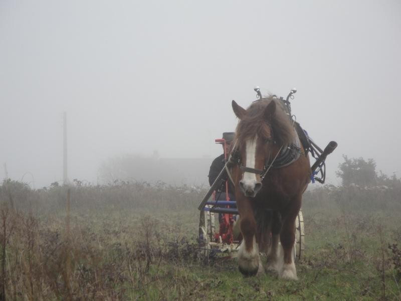 Thème de Janvier : le cheval au travail Photo_42