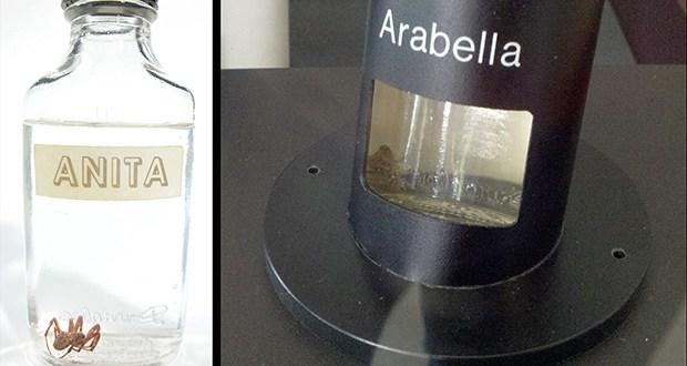 Hommage à Arabella et Anita 48_ara10