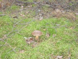 Где собирать грибы (Отчеты август 2008 - Октябрь 2008) Imgp_111