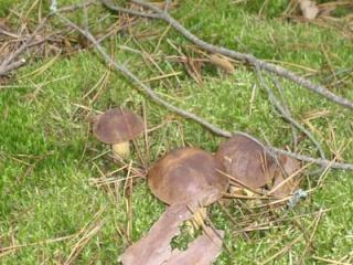 Где собирать грибы (Отчеты август 2008 - Октябрь 2008) Imgp_113