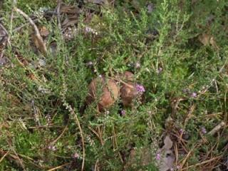 Где собирать грибы (Отчеты август 2008 - Октябрь 2008) Imgp_114
