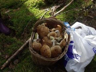 Где собирать грибы (Отчеты август 2008 - Октябрь 2008) Imgp_115