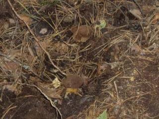 Где собирать грибы (Отчеты август 2008 - Октябрь 2008) Imgp_116