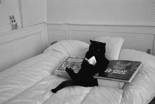 Les chats - Page 7 27010810