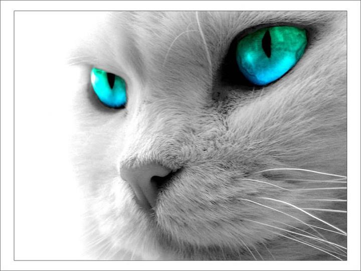 Les chats - Page 7 30229710
