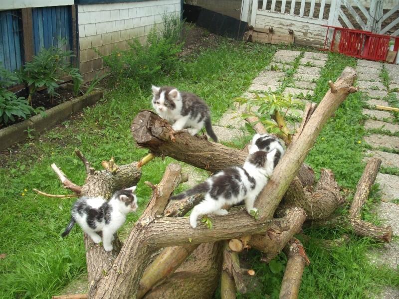 Les chats Dscf3310