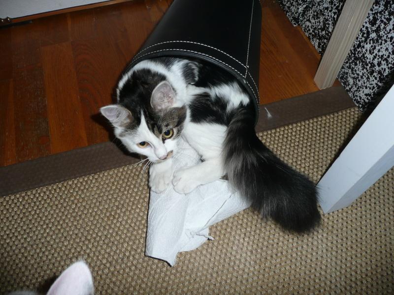 Les chats - Page 3 P1020410