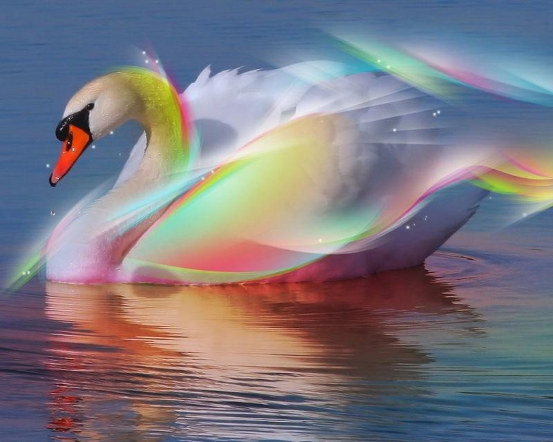 tout est multicolore - Page 4 Pic20110