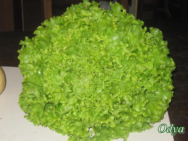 salades... 2011_012
