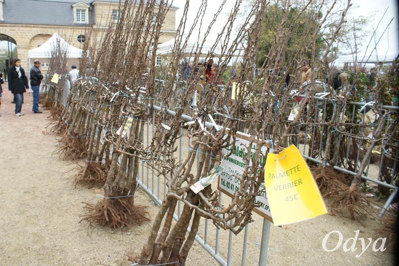 PEPIFOLIES Marché aux végétaux DOUE LA FONTAINE 49  2012_n15