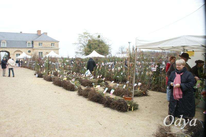 PEPIFOLIES Marché aux végétaux DOUE LA FONTAINE 49  2012_n17