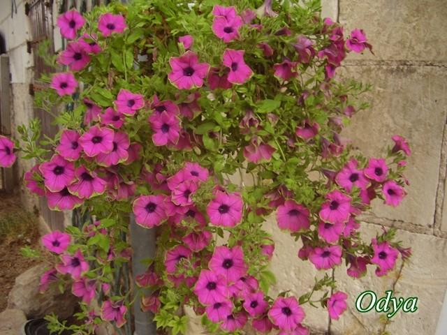 idee jardiniere Juin_218