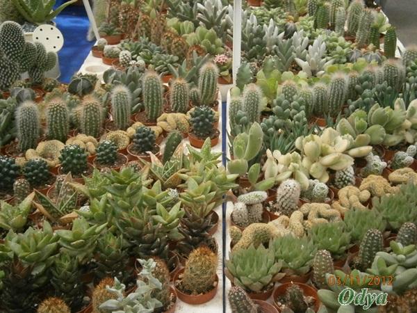 """Nouvelle rubrique """"plantes grasses""""! Niort_30"""