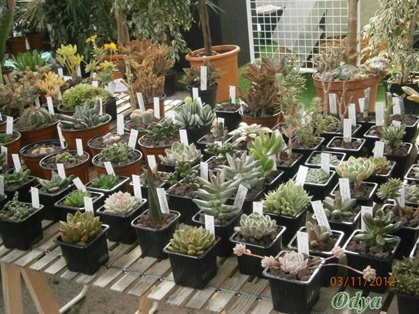 """Nouvelle rubrique """"plantes grasses""""! Niort_52"""