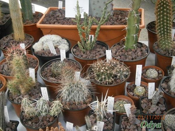 """Nouvelle rubrique """"plantes grasses""""! Niort_54"""