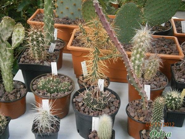 """Nouvelle rubrique """"plantes grasses""""! Niort_55"""