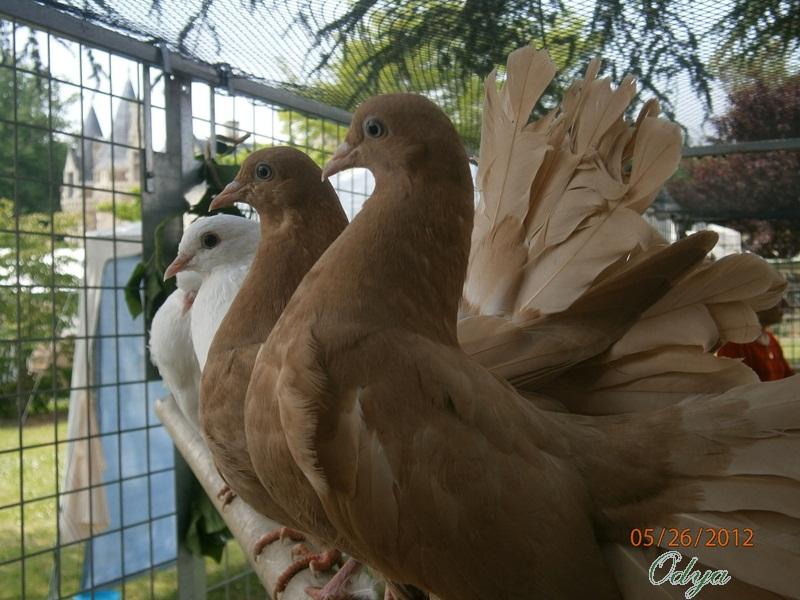 Ma passion pour l'aviculture - Page 2 P5260110
