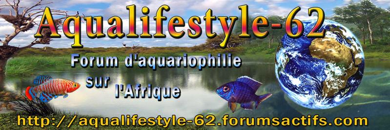 AQUALIFESTYLE  62