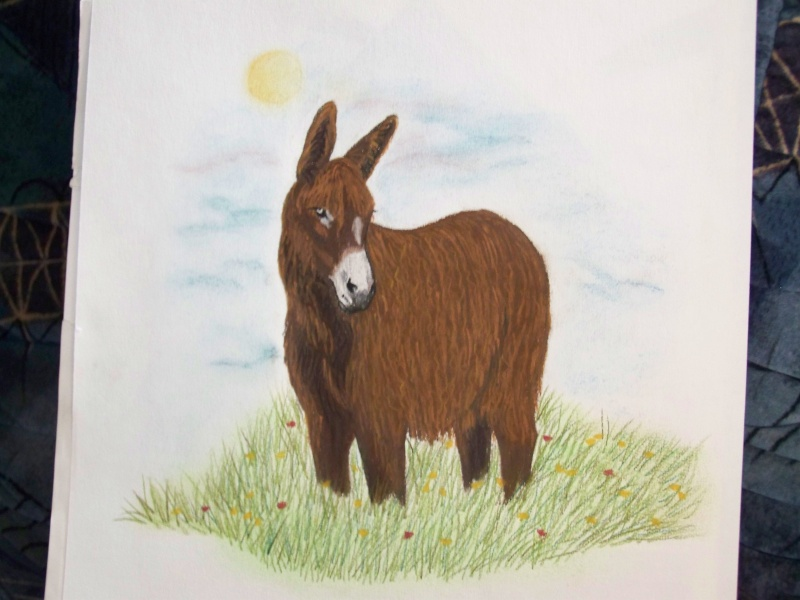 animaux:dessin,pyrogravure, peinture tissus, porcelaine etc.. 100_1422