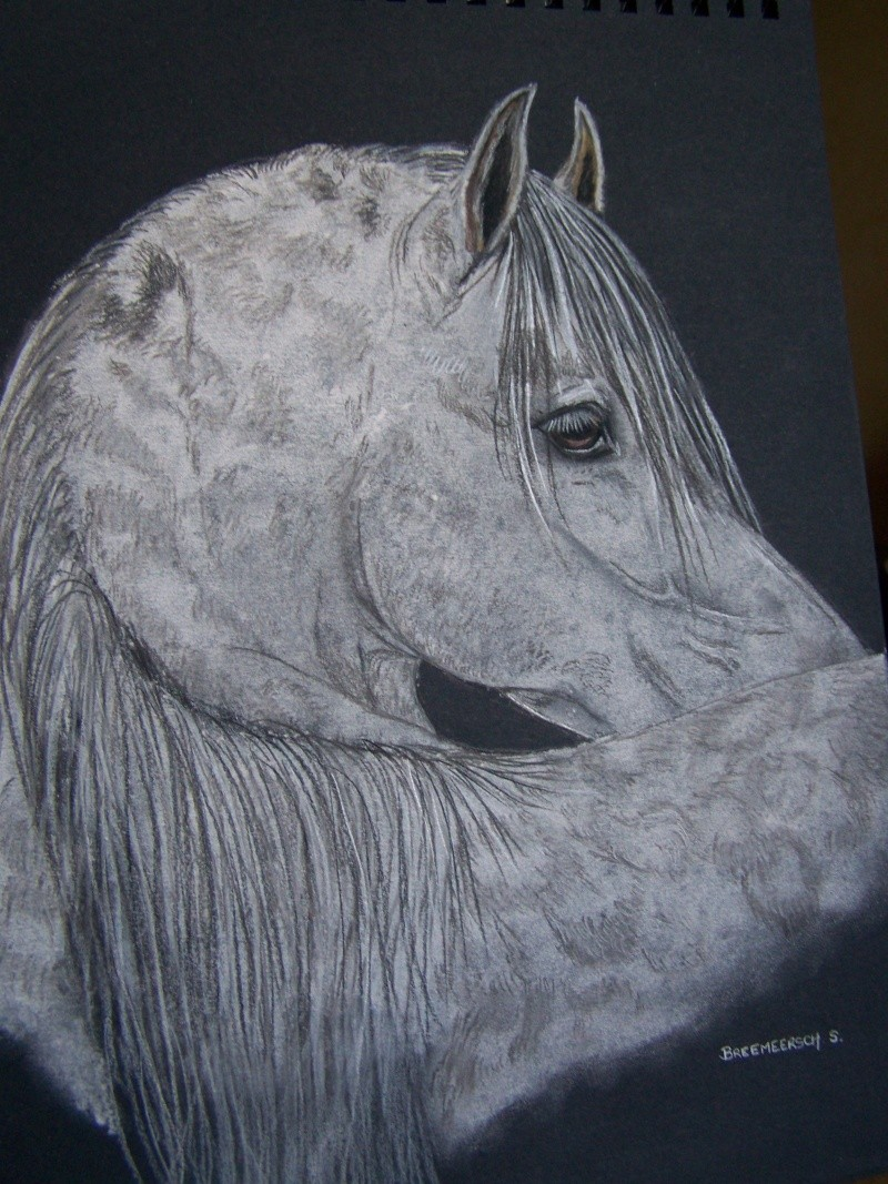 animaux:dessin,pyrogravure, peinture tissus, porcelaine etc.. - Page 2 100_1441