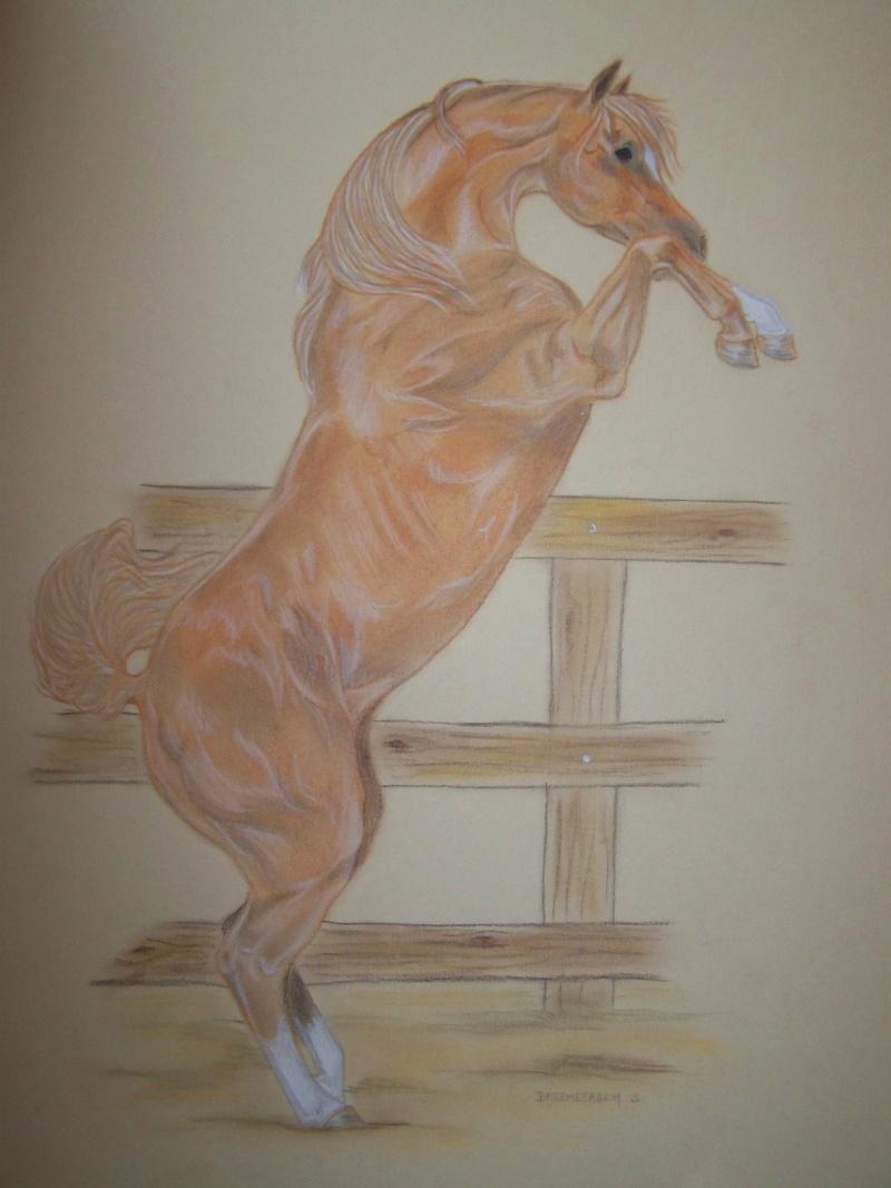 animaux:dessin,pyrogravure, peinture tissus, porcelaine etc.. - Page 2 100_1512