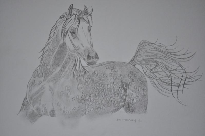 animaux:dessin,pyrogravure, peinture tissus, porcelaine etc.. - Page 2 Pommel10