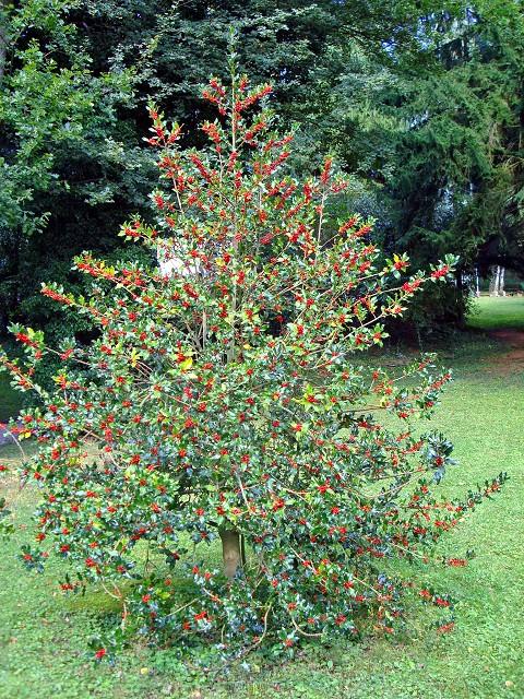 Fotoprojekt - Bäume - Seite 8 K-dsc018