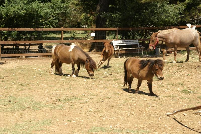 Un mini cheval de un mois et une jument de 1 mois aussi ... Dsc04613
