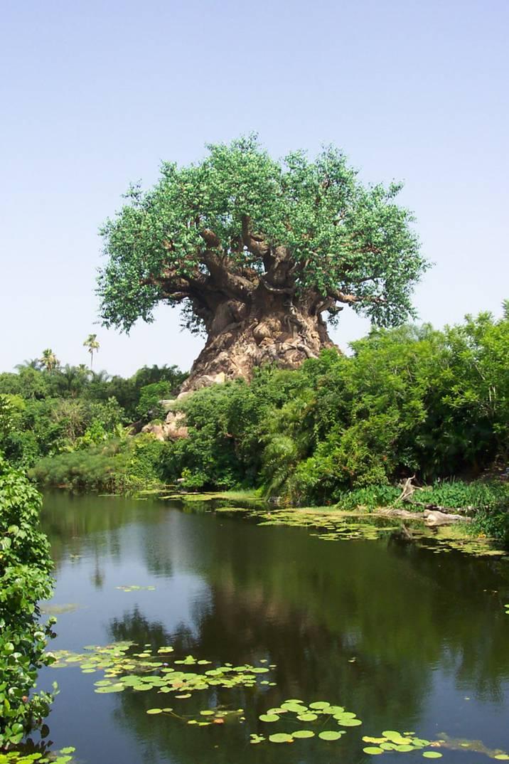 Un arbre  magnifique et étonnant  Image110