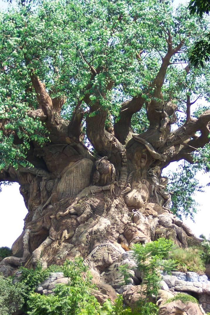 Un arbre  magnifique et étonnant  Image210