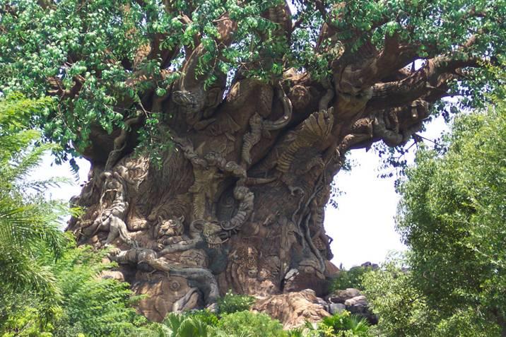 Un arbre  magnifique et étonnant  Image310