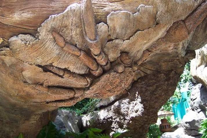 Un arbre  magnifique et étonnant  Image610