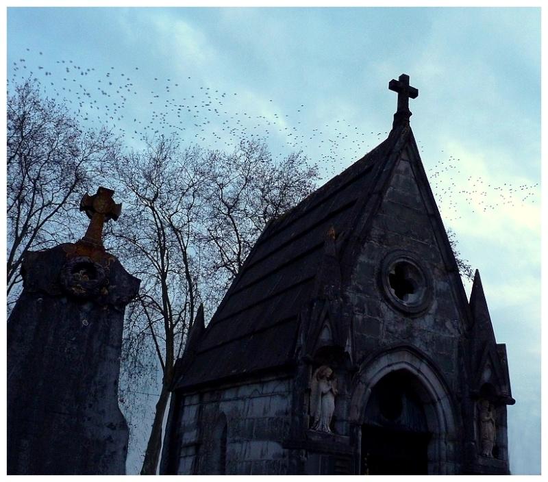 Envolée d'anges Envola10