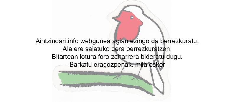 Euskal Herria Aintzindari - Web Txantx11