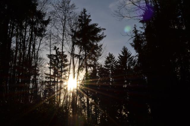 un peu de soleil ! Dsc_0115