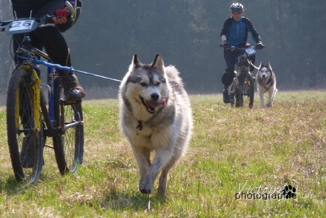 course Oberhaslach 25/03/2012 (67) Oberha14
