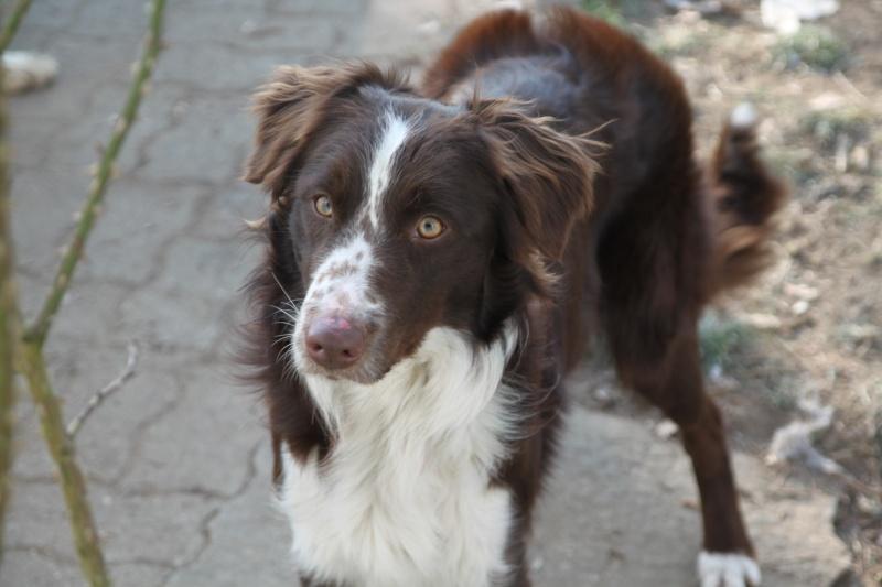 Bonjour a tous , une passionée des chiens plus particulierement des Border  Img_7317