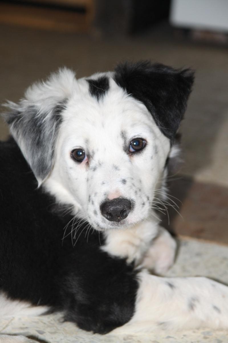 Bonjour a tous , une passionée des chiens plus particulierement des Border  Img_7811