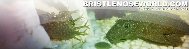 Bristlenose World