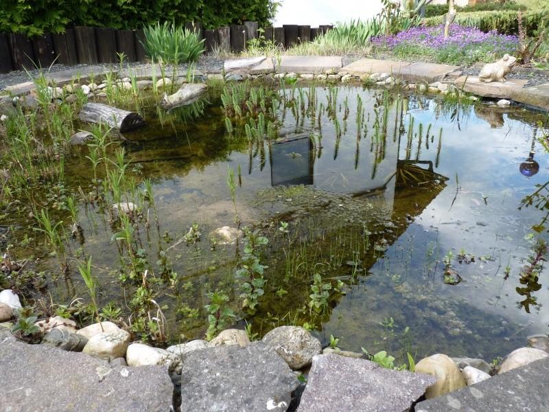 Gärten im Bilde - Seite 3 00331