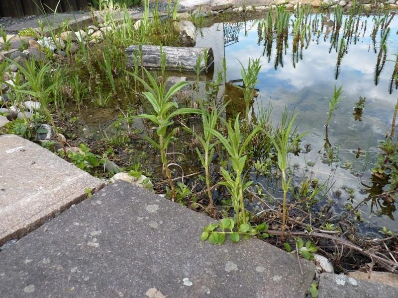 Gärten im Bilde - Seite 3 00826