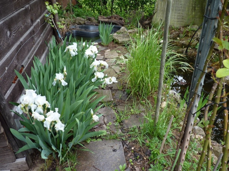 Gärten im Bilde - Seite 3 01524