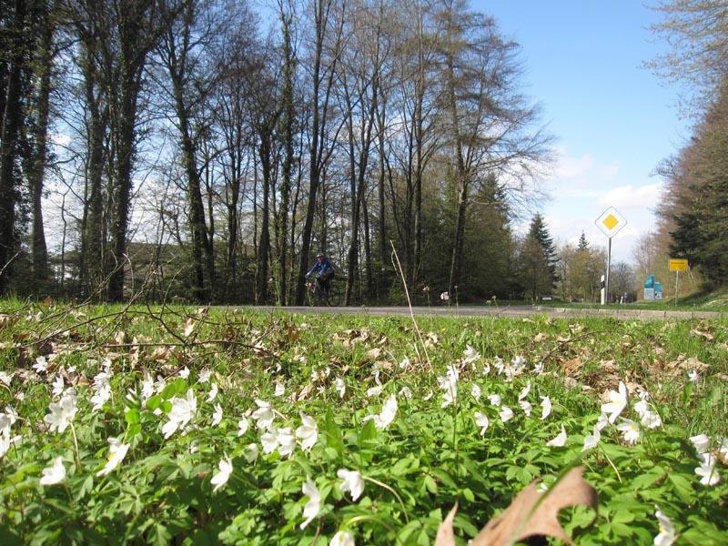 Sortie du 7 avril à Britzingen, Badenweiler, Feldberg, Auggen Img_0587