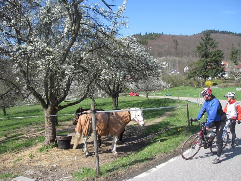 Sortie du 7 avril à Britzingen, Badenweiler, Feldberg, Auggen Img_0588
