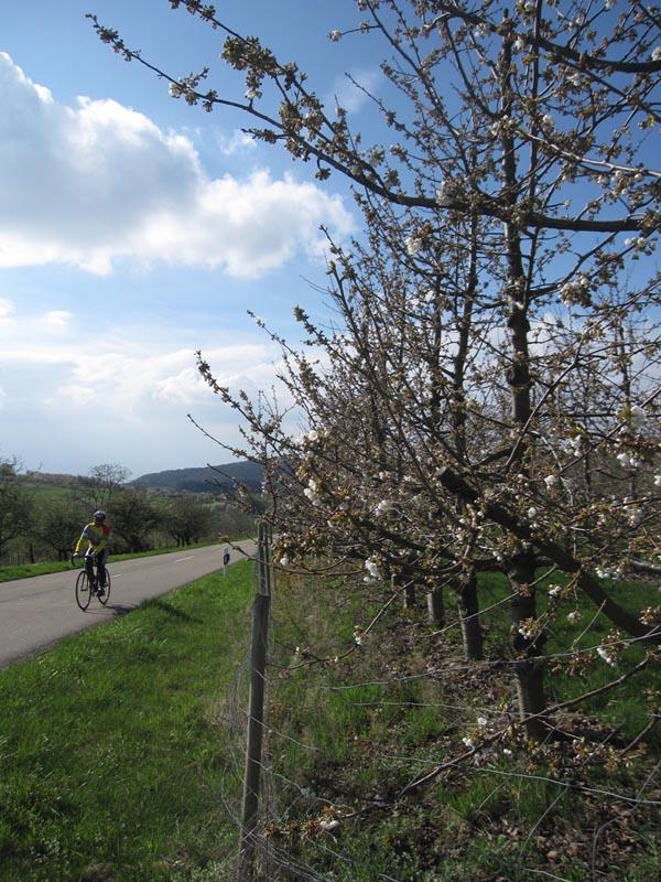 Sortie du 7 avril à Britzingen, Badenweiler, Feldberg, Auggen Img_0590