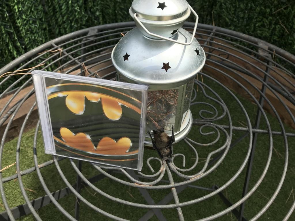 ¡Vaya día que llevo!. Se me ha metido un murciélago en casa - Página 7 6f7a7c10