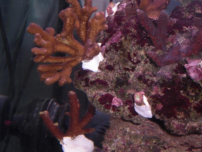 projet de lido 120 de juwel en eau de mer  - Page 2 Cimg2011